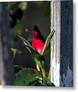 A Single Rosebud Metal Print