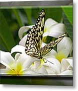A Sip Of Nectar Metal Print