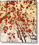 A Skyward View Of The Bare Branches Metal Print