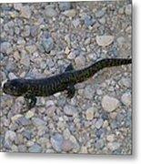 A Slow Salamander  Metal Print