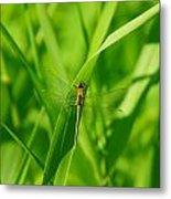A Small Dragonfly Metal Print