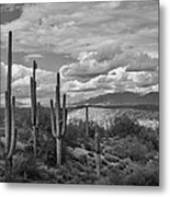 A Sonoran Winter Day In Black And White  Metal Print