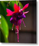 A Special Red Flower  Metal Print