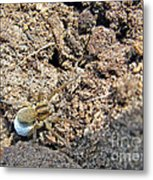 A Spider With The Egg Sack Metal Print