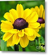 A Splash Of Sunshine Metal Print
