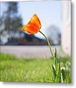 A Spring Tulip Metal Print