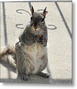 A Squirrel Known As Chippy Metal Print