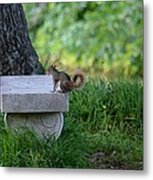 A Squirrel's Day Out Metal Print