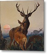 A Stag With Deer In A Wooded Landscape At Sunset Metal Print