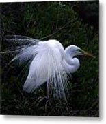 A Stand Out Metal Print by Skip Willits