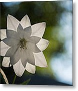 A Star In My Garden Metal Print