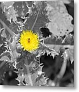 A Sticky Flower Metal Print