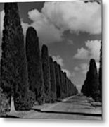 A Street Lined With Cypress Trees Metal Print
