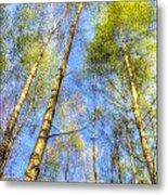 A Summer Forest Metal Print