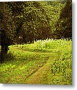A Summer's Trail Metal Print