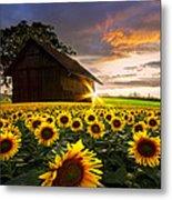 A Sunflower Moment Metal Print