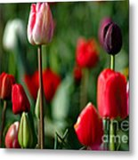 A Tapestry Of Tulips Metal Print