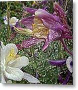 a taste of dew i do and PCC  garden too     GARDEN IN SPRING MAJOR Metal Print by Kenneth James