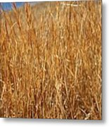 A Thicket Of Grass Metal Print