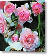 A Time For Roses Metal Print