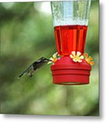 A Tiny Little Ruby-throated Hummingbirds Metal Print