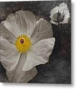 A Touch Of Color - Poppy Metal Print