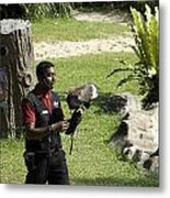 A Trainer And A Large Bird Of Prey At A Show Inside The Jurong Bird Park Metal Print