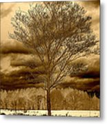 A Tree At Appleton Metal Print