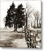 A Tree Grows In Gettysburg Metal Print