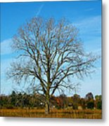 A Tree In Fall... Metal Print