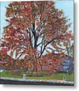 A Tree In Sherborn Metal Print
