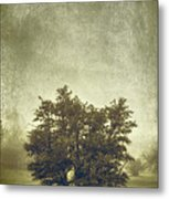 A Tree In The Fog 2 Metal Print
