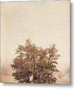 A Tree In The Fog Metal Print