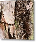A Treetrunk Abstract Metal Print