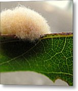 A Tribble On The Edge Metal Print