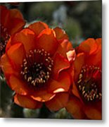 A Trio Of Red  Metal Print