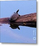 A Turtle Reflecting Metal Print