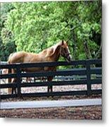 A Very Beautiful Hilton Head Island Horse Metal Print
