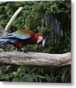 A Very Colorful And Bright Macaw Bird Perched On A Branch Metal Print