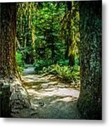 Pathway Cathedral Grove Metal Print