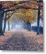 A Walk In Salem Fog Metal Print