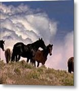 A Walk In The Clouds Metal Print