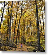 A Walk In The Dune Land Forest Metal Print