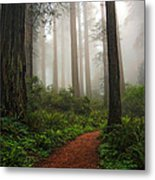 A Walk In The Fog Metal Print