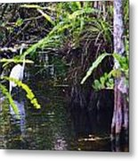 A Walk In The Glades Metal Print