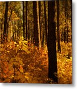 A Walk Through The Woods  Metal Print