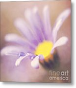 A Waterdrop On The Petal Of A Daisy Metal Print