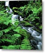 A Waterfall In Redwood National Park Metal Print