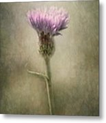 A Weed Is But A Flower In The Wrong Place.. Metal Print