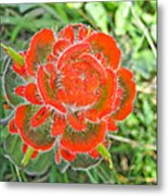 A West Coast Flower Metal Print